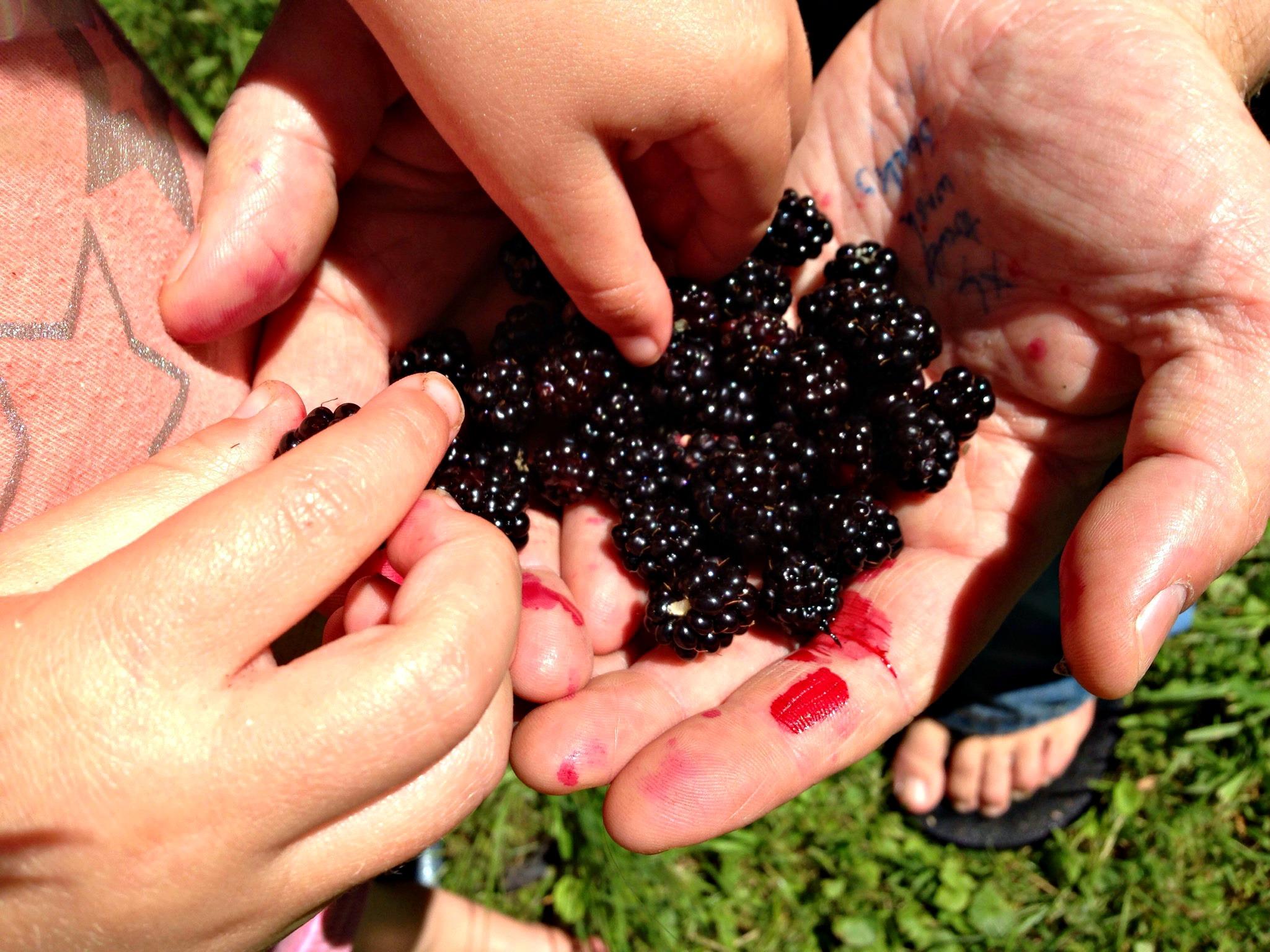 blackberries!