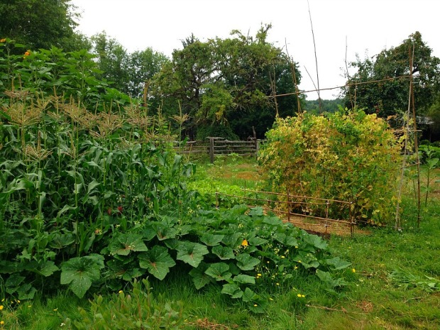 farm in august 1