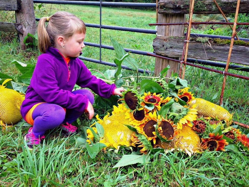 Avery and sunflowers.jpg