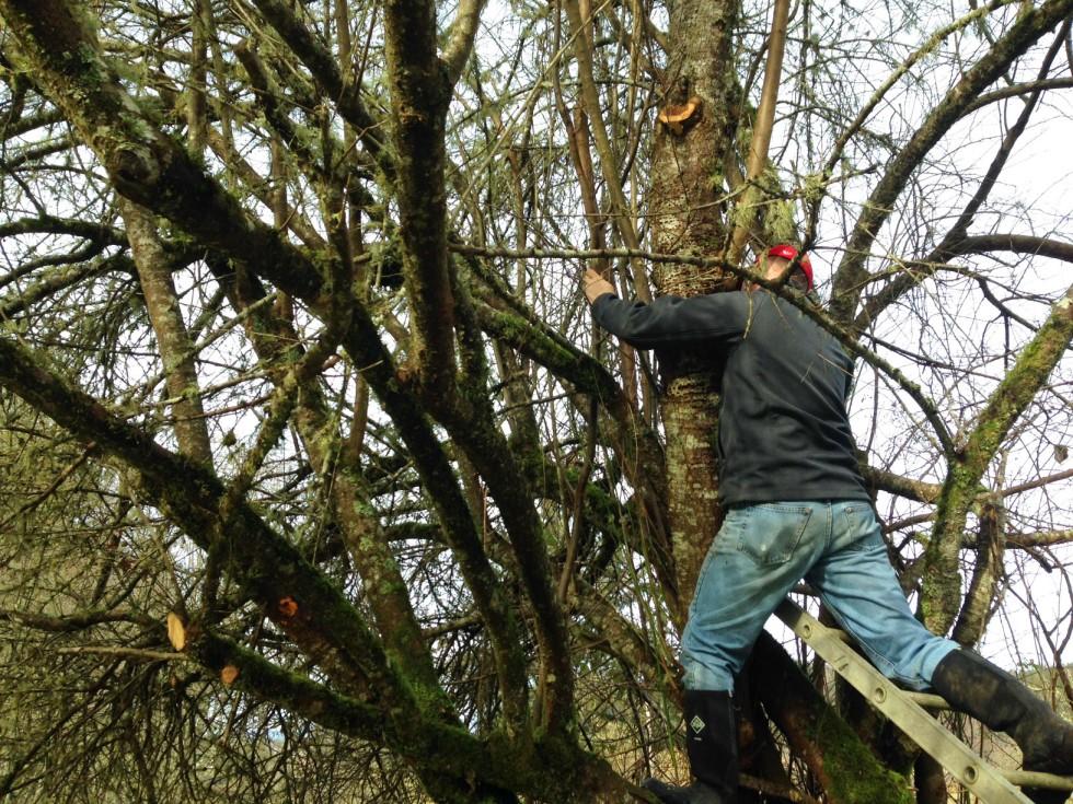 0218-pruning3