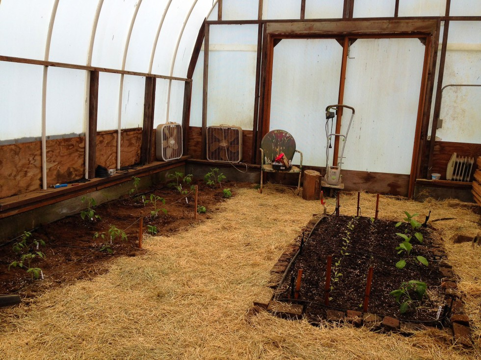 0418 greenhouse.jpg