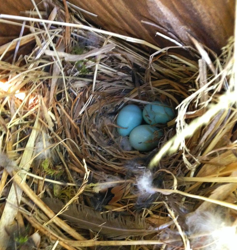 0422 eggs