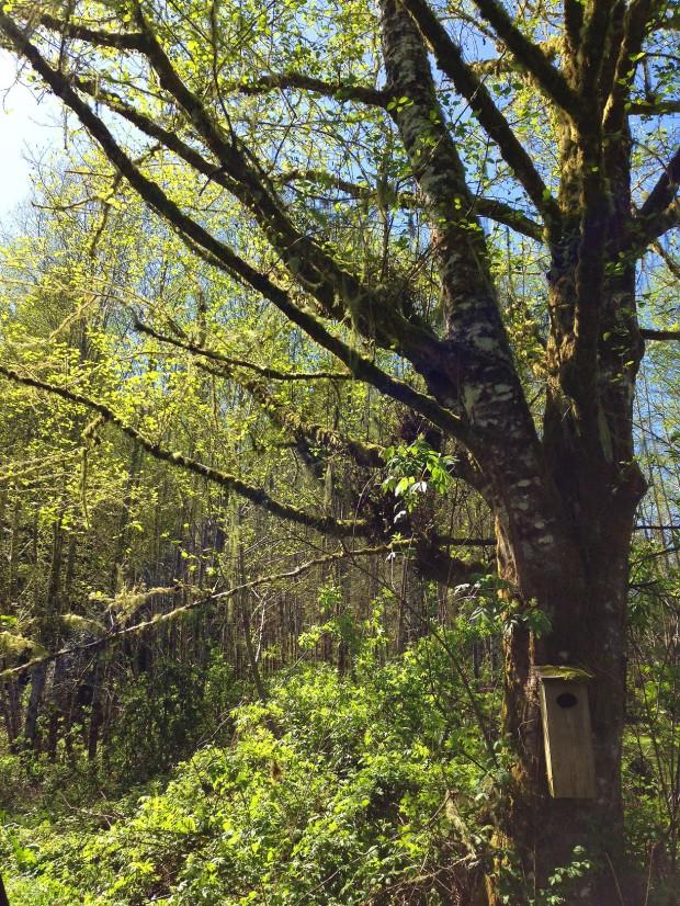0422 tree and nest box