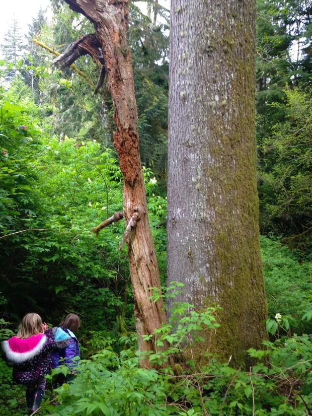 0502 woods 2