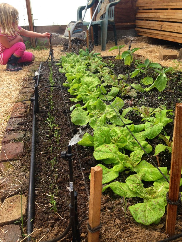 0510 lettuce