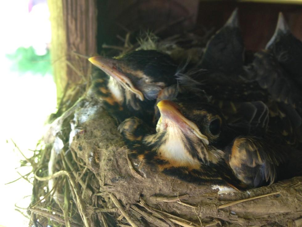 0523 birds 2
