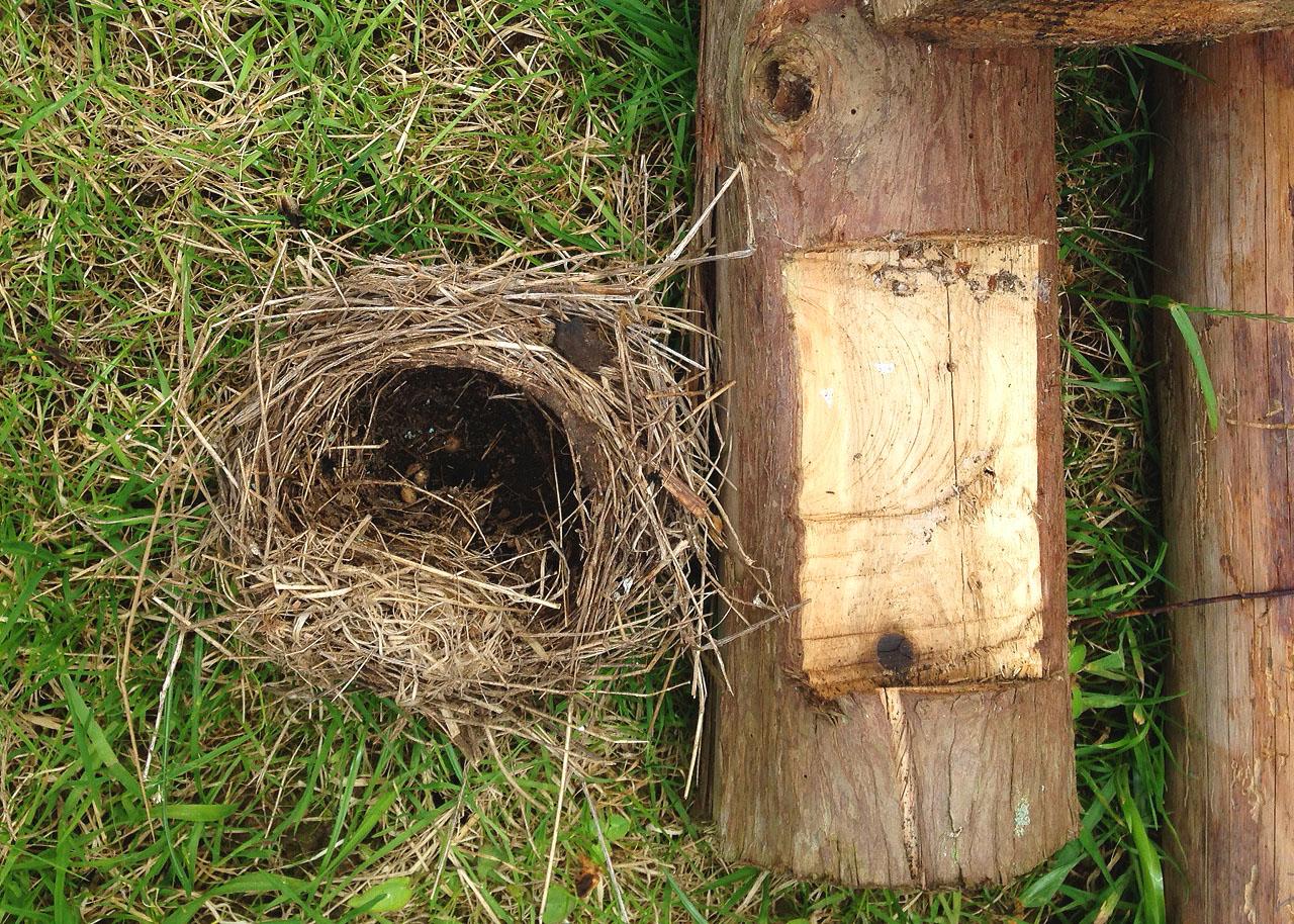 0523 nest.jpg