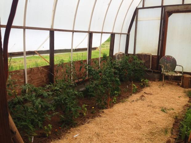 0528 tomatoes