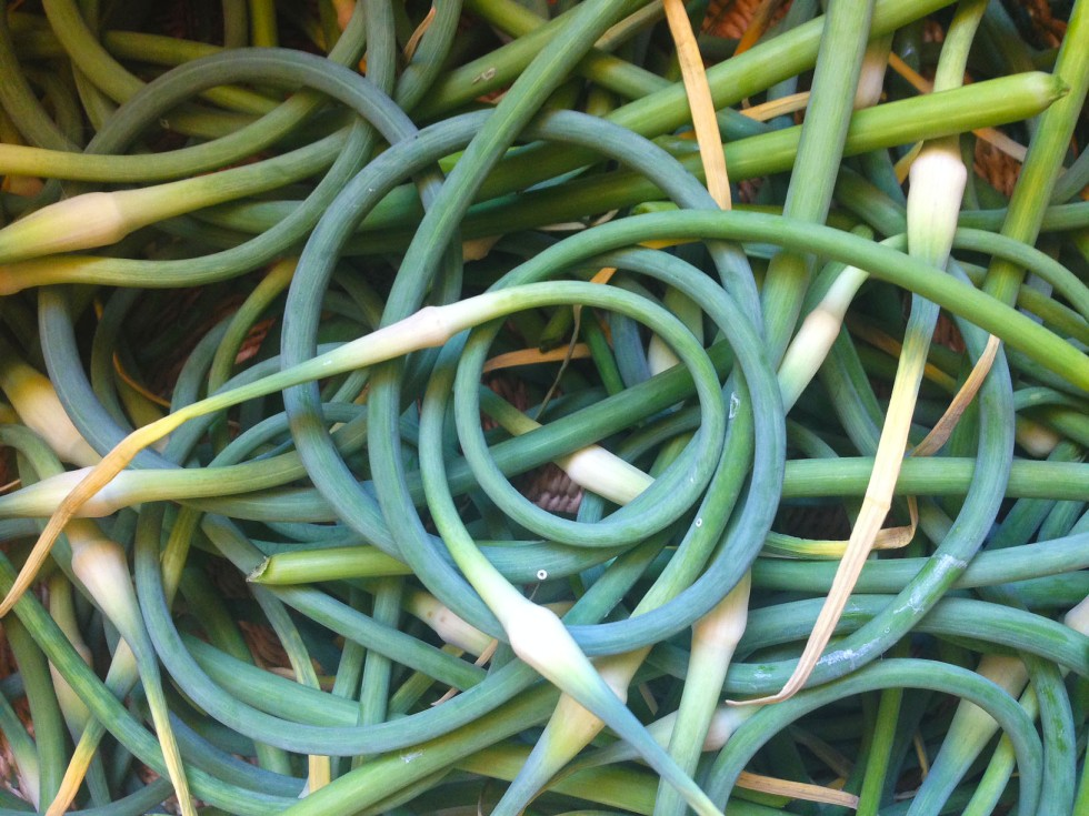 0627 garlic scapes 2