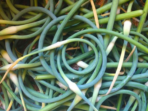 0627 garlic scapes 2
