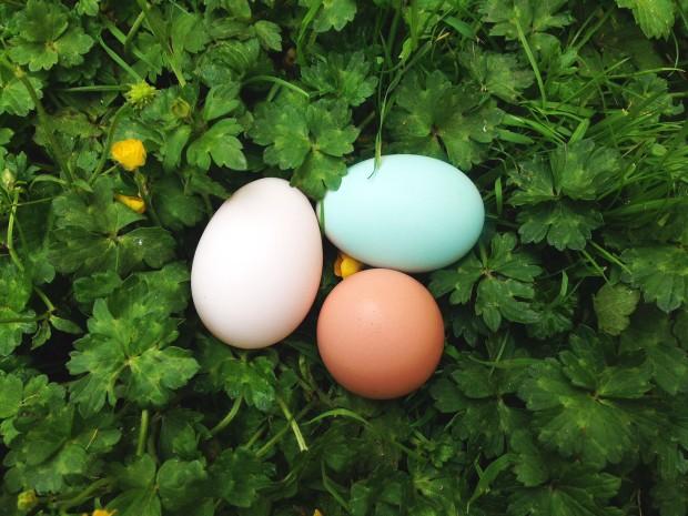 0628 eggs