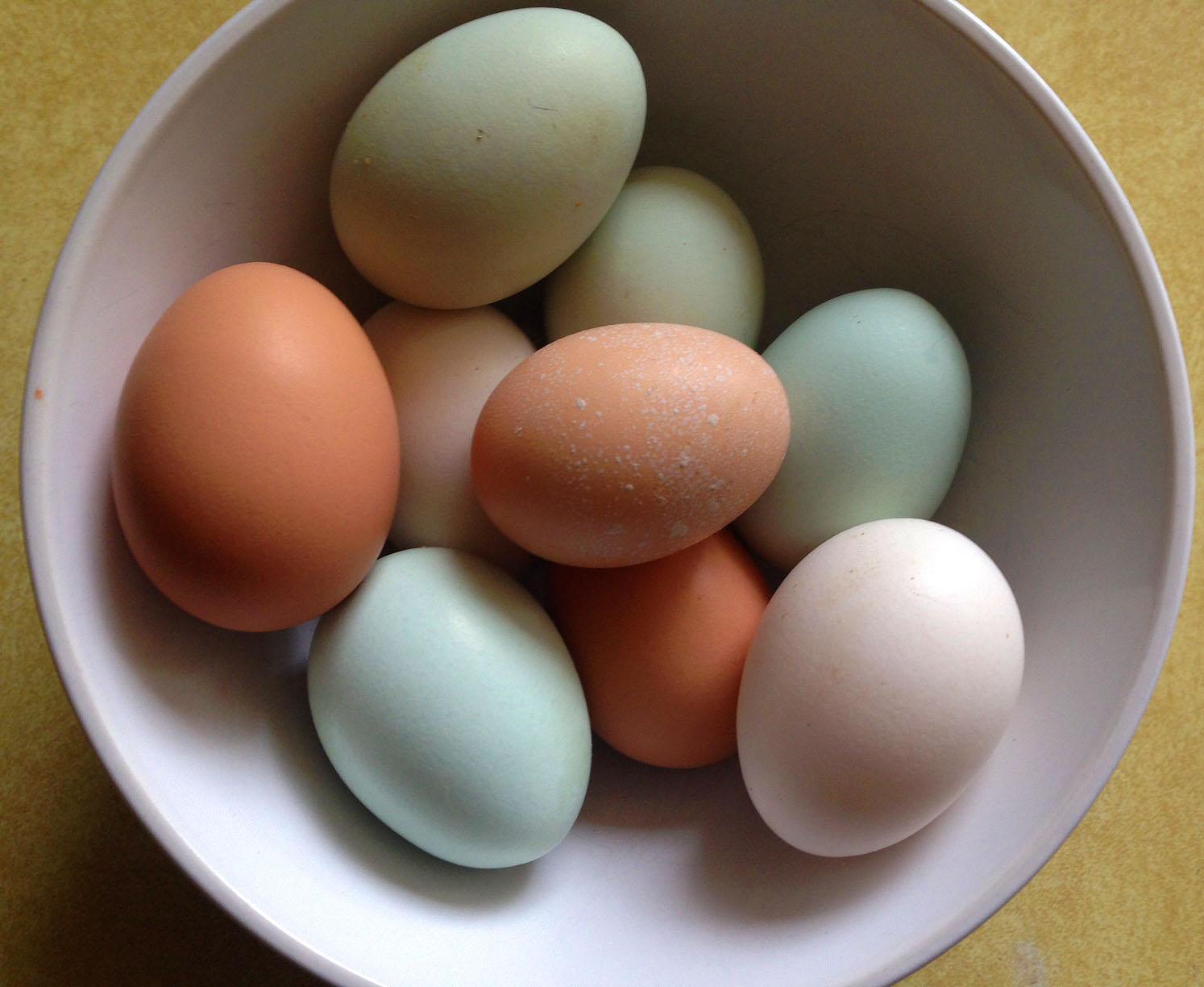 0702 eggs.jpg
