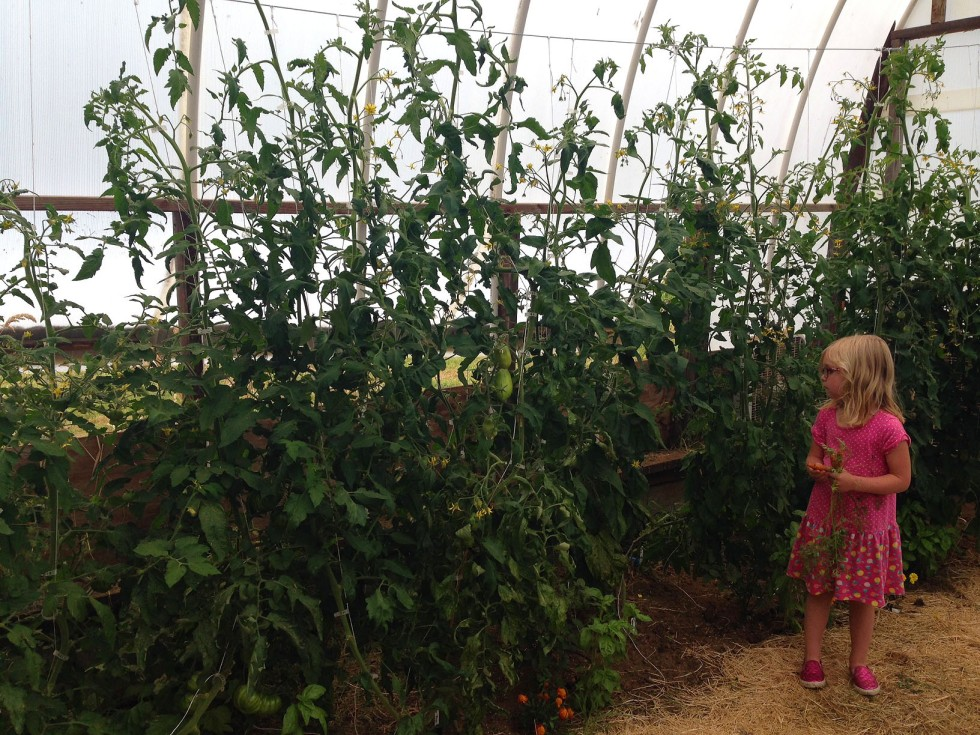 0714 greenhouse