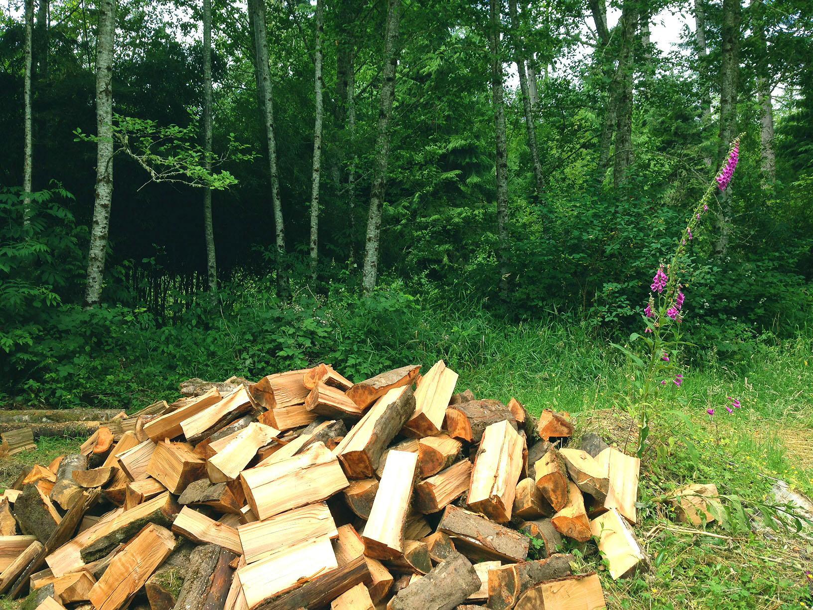 0721 woodpile.jpg