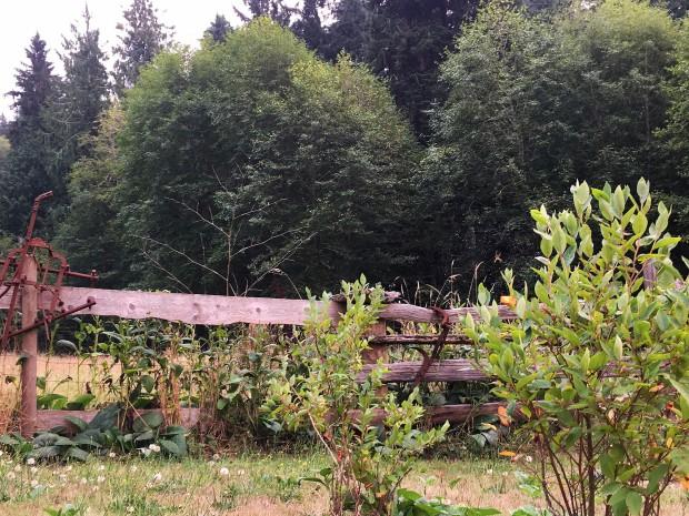091417 garden fence.jpg