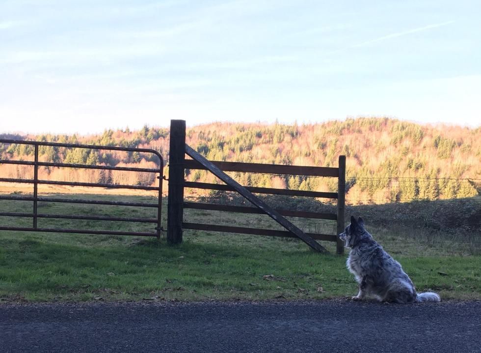 Una by fence.jpg
